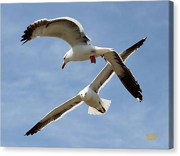 Two Seagulls Almost Collide  Canvas Print