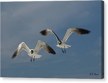 Two Seagulls Canvas Print by Dennis Stein