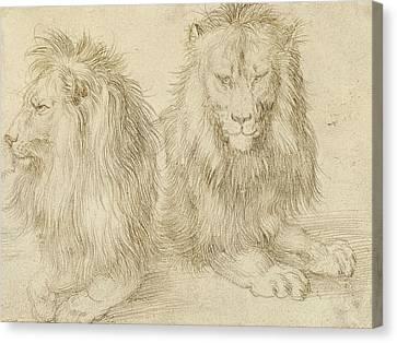 Albrecht Canvas Print - Two Seated Lions by Albrecht Durer