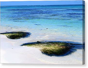 Two Seaweed Mounds On Punta Cana Resort Beach Canvas Print