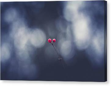 Canvas Print featuring the photograph two by Shane Holsclaw