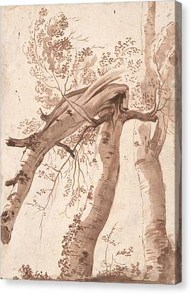 Two Silver Birches, The Front One Fallen Canvas Print