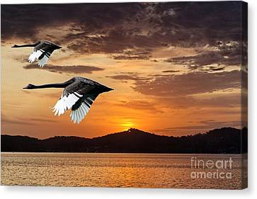 Two Swans At Dawn.  Art Photo Digital Download And Wallpaper Screensaver. Diy Designer Print. Canvas Print by Geoff Childs