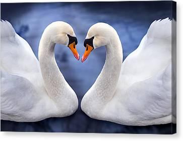 Two Swans Canvas Print by Simon Kayne