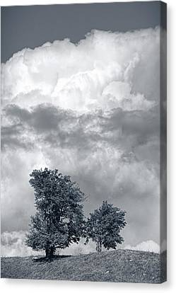 Two Trees #9249 Canvas Print by Andrey Godyaykin