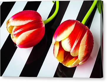 Two Tulips On Striped Plate Canvas Print
