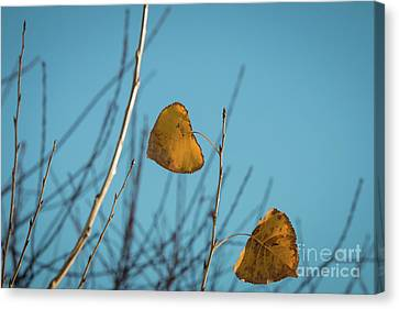 Canvas Print featuring the photograph Two Warriors  by Ana V Ramirez
