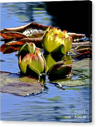 Two Water Lilies Canvas Print by Carol F Austin
