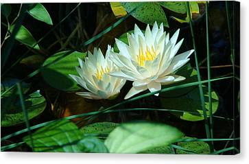 Two Waterlilies Canvas Print by Angela Annas