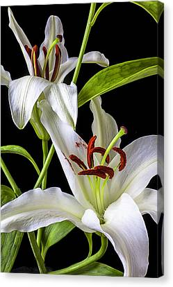 Stamen Canvas Print - Two Wonderful Lilies  by Garry Gay