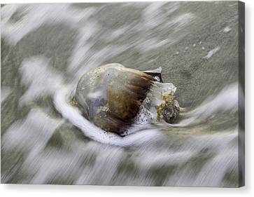 Tybee Isalnd Jellyfish Canvas Print