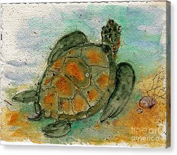 Tybee Sea Turtle Canvas Print by Doris Blessington