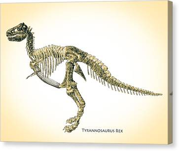 Tyrannosaurus Rex Skeleton Canvas Print by Bob Orsillo