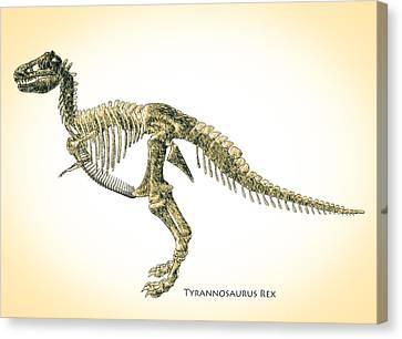 T-rex Canvas Print - Tyrannosaurus Rex Skeleton by Bob Orsillo