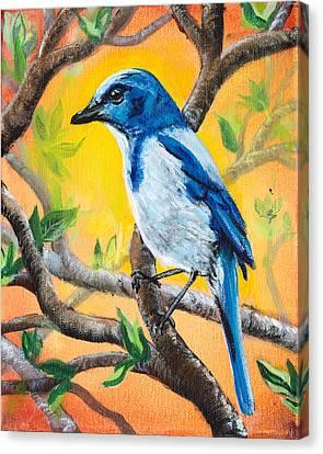 Ultramarine Flycatcher Bird By Gretchen Smith Canvas Print by Gretchen  Smith