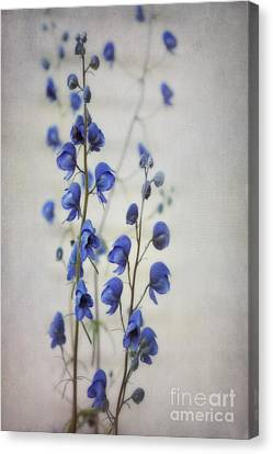 Ultramarine  Canvas Print by Priska Wettstein