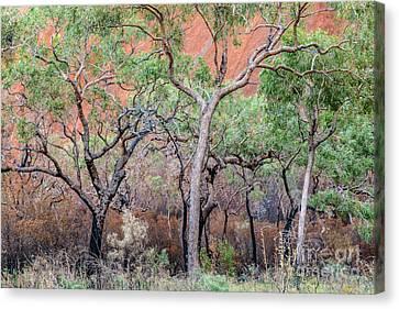 Canvas Print featuring the photograph Uluru 05 by Werner Padarin
