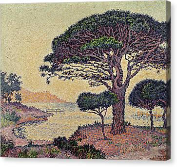 Signac Canvas Print - Umbrella Pines At Caroubiers by Paul Signac