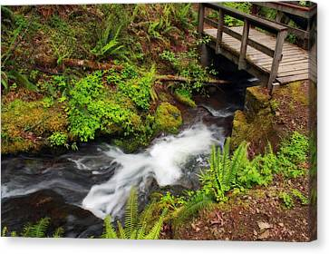 Umpqua Forest Beauty Canvas Print