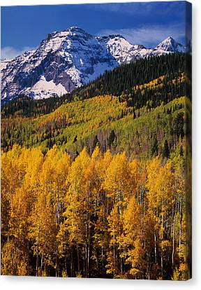 Uncompahgre National Forest Co Usa Canvas Print by Panoramic Images