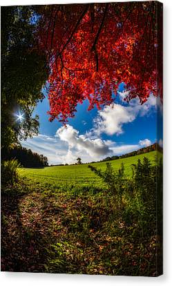 Under A Red Autumn Maple - Vertical Canvas Print by Chris Bordeleau