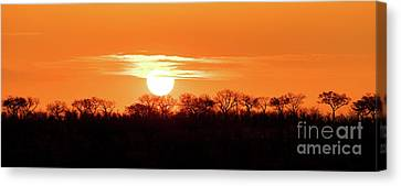 Under African Skies Canvas Print by Jane Rix
