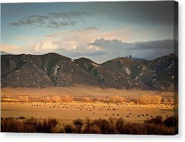 Under  Big Skies Of Montana Canvas Print by Doug van Kampen, van Kampen Photography