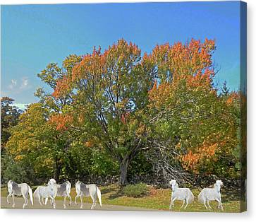 Canvas Print - Under The Autumn Maple Tree by Patricia Keller