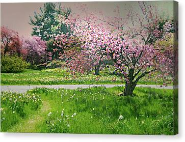 Canvas Print featuring the photograph Under The Cherry Tree by Diana Angstadt
