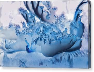 Sea Anenome Canvas Print - Under The Sea Colorful Watercolor Art #20 by Debra and Dave Vanderlaan