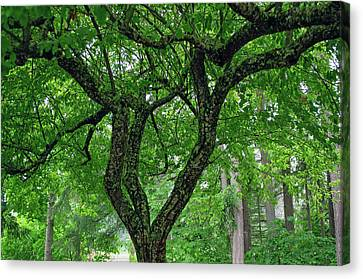 Canvas Print featuring the photograph Under The Shade Tree by Tikvah's Hope
