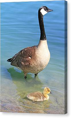 Under The Watchful Eye Canvas Print by Shoal Hollingsworth