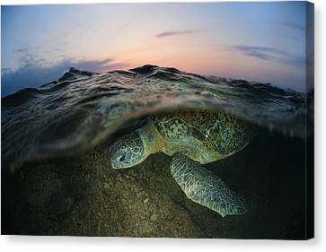 Under The Wave Canvas Print by Andrey Narchuk