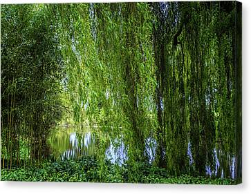 Forest Floor Canvas Print - Under The Willow Tree by Martin Newman