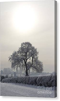 Under The Wintery Sky Canvas Print by Angel  Tarantella