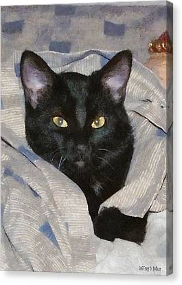 Undercover Kitten Canvas Print