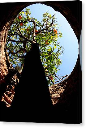Underground Tree Canvas Print