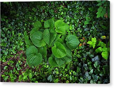 Canvas Print featuring the photograph Undergrowth by Anthony Rego