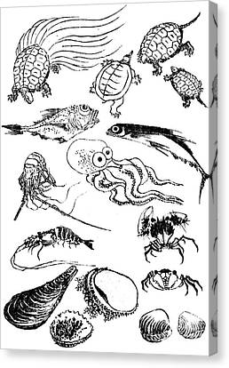 Undersea Creatures, From A Manga Canvas Print