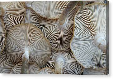 Underside Of Mushrooms Canvas Print by Greg Adams Photography