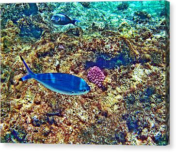 Underwater Canvas Print by Andy Za