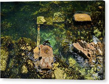 Canvas Print featuring the photograph Underwater Art At Cannery Row by Susan Wiedmann