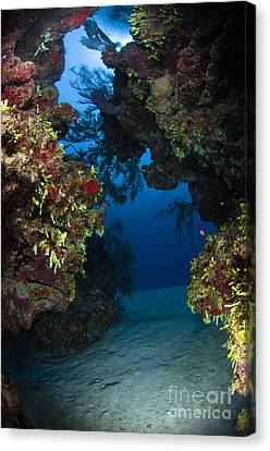 Underwater Crevice Through A Coral Canvas Print by Todd Winner