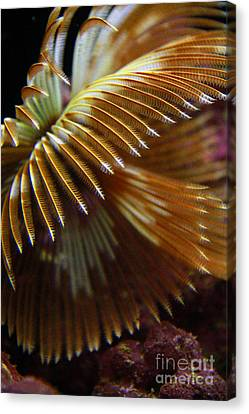Underwater Feathers Canvas Print