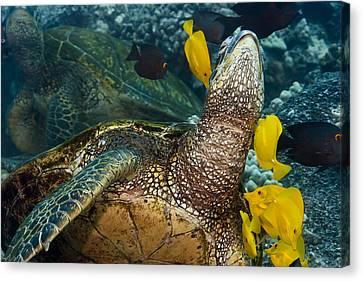 Underwater Friends Canvas Print by Dave Fleetham