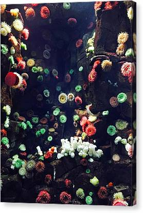 Underwater Canvas Print by Natasha Spevak