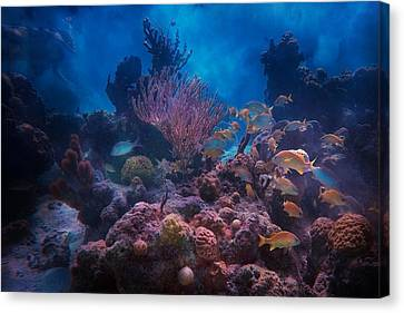 Underwater Paradise Canvas Print by Betsy Knapp