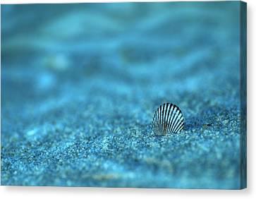 Seashell Fine Art Canvas Print - Underwater Seashell - Jersey Shore by Angie Tirado
