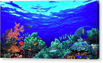 Underwater View Of Pallid Triggerfish Canvas Print by Panoramic Images