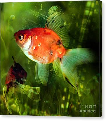 Underwater World Canvas Print by Angel  Tarantella